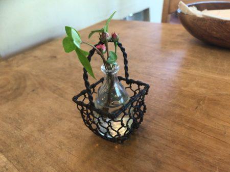 ランチとモーニングが美味しいフォーシーズンfourseasonのテーブル上にある観葉植物