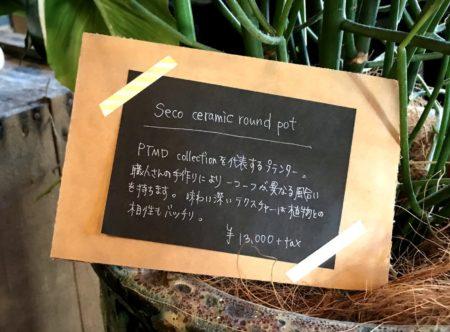 桜井「大人様ランチ」で人気のUG(ユージー)の観葉植物の値札