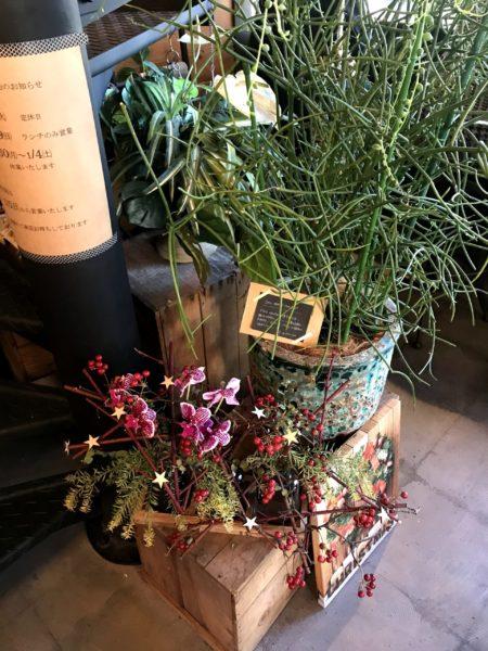 桜井「大人様ランチ」で人気のUG(ユージー)の観葉植物